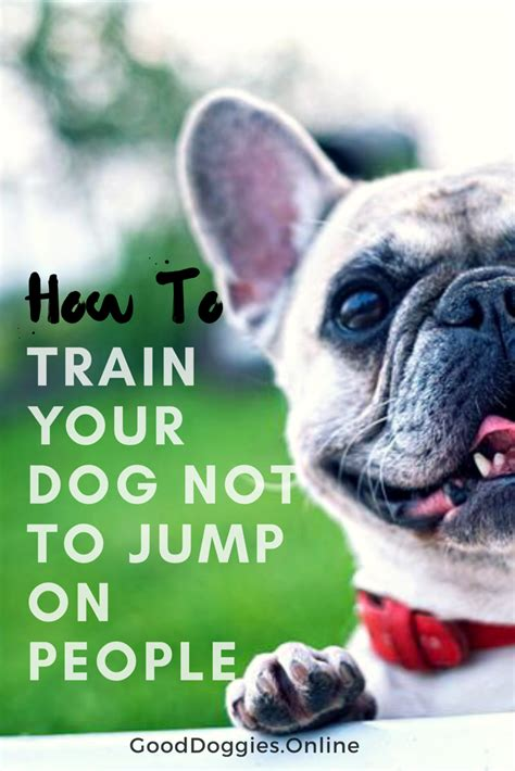 how to your to not jump on how to yourself and your not to jump on doggies