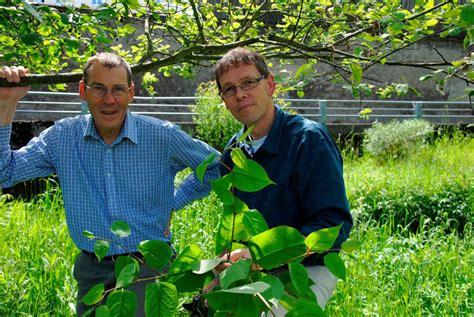 japanischer garten freiburg preise staudenkn 246 terich quot eine pflanze f 252 r den restm 252 ll quot bad