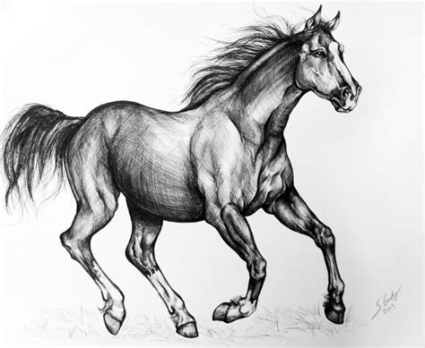 mustang horse drawing mustang horse drawing with color
