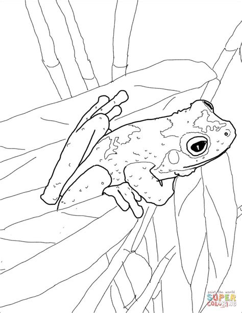 green frog coloring page green eyed tree frog coloring page free printable