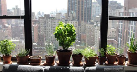 moving outdoor gardens indoors  winter urban gardens