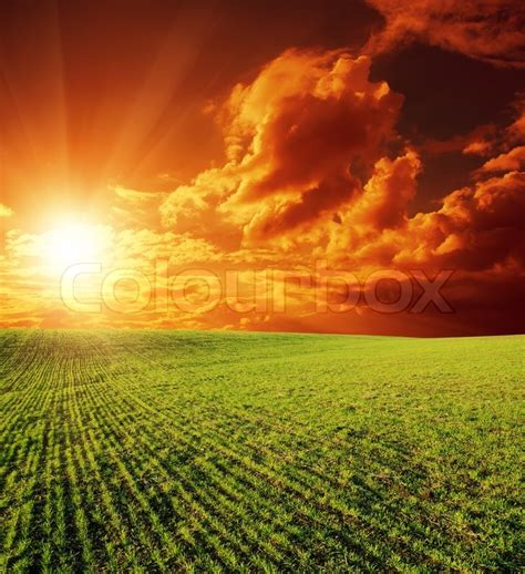 Nature De Sol by Agricultural Green Field And Sunset Stock Photo Colourbox