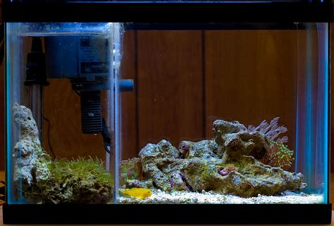 Avega 2 Maxi Dsb 21 my 2 5g pico with built in sump refugium page 2 reef