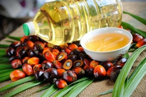 Minyak Kelapa Sawit Turun goriau harga kelapa sawit di riau turun terseret