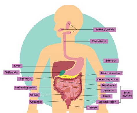 140954947x look inside your body inside your gut your health matters urban health