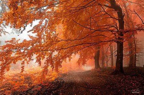 by janek sedlar photography pinterest les photos de for 234 ts d automne de janek sedlar 2tout2rien
