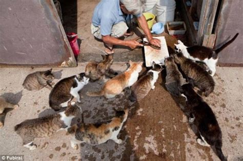 cat island japan welcome to cat island the japanese fishing village where