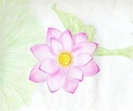 Drawing Of A Lotus Flower Lotus Flower Drawings Made Easy