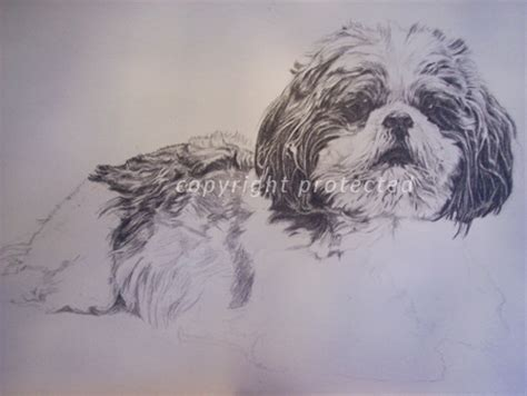 how to draw a shih tzu puppy step by step how to draw a shitzu