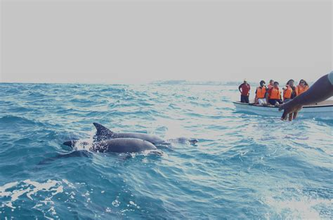 boat tour zanzibar file dolphin tour in zanzibar jpg wikimedia commons