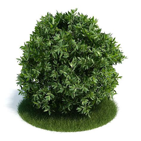 shrub small leaves 3d model cgtrader com