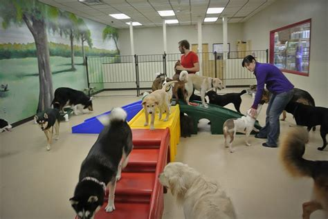 Pet Room Ideas by Doggy Daycare Peoria Il My Dog S Bakery Daycare Amp Grooming