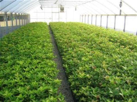 Alabama Nursery And Landscape Association by Wholesale Only Home