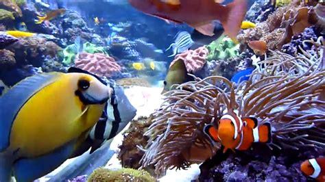 best fan for aquarium saltwater fist tank