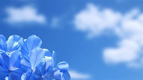 imagenes de rosas surrealistas paisaje con flores azules 1920x1080 hd fondoswiki com