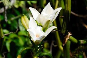 list of the best types of orchids