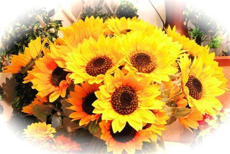 girasoli fiori girasoli gabarra fiori