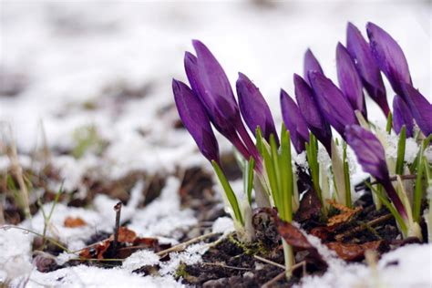 spring start why was the start to spring 2013 so cold met office