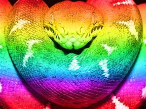 rainbow colored snake rainbow boa color rainbow snake wow snakes