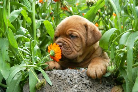 puppy smell why s sense of smell is so 187 science abc