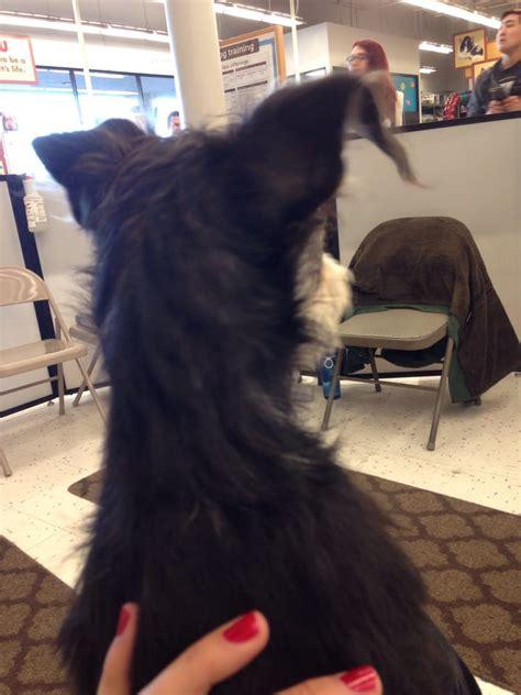 puppy store reno petco 20 photos 31 reviews pet stores 5565 s virginia st reno nv phone