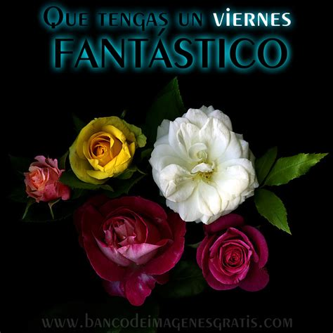 imagenes feliz viernes con rosas banco de im 225 genes para ver disfrutar y compartir