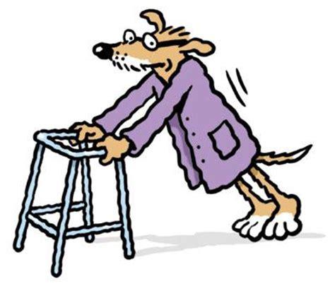 house training older dog keeping your dog young thedogtrainingsecret com