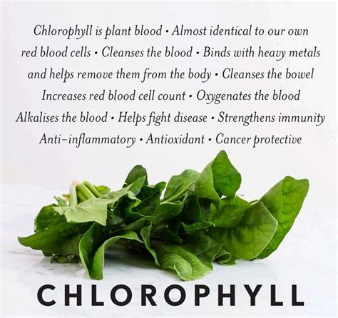 what color is chlorophyll any green plant contains some chlorophyll as this gives it