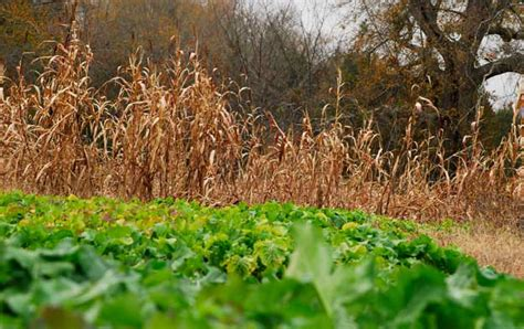 mossy oak food 4 reasons to plant a barrier for your food plot mossy oak