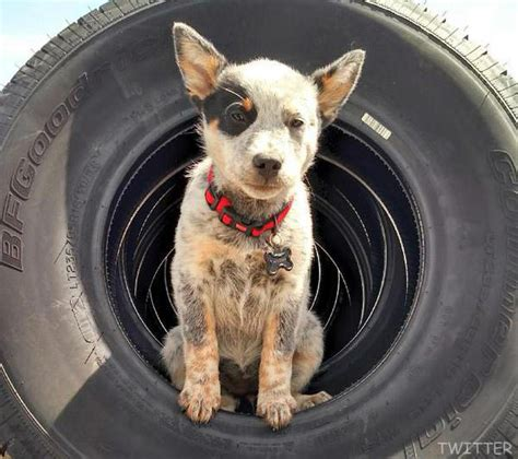 is farmtruck married photos farmtruck s puppy suzy from outlaws