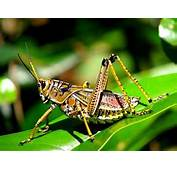 Are There Grasshoppers In Heaven  Pest Cemetery