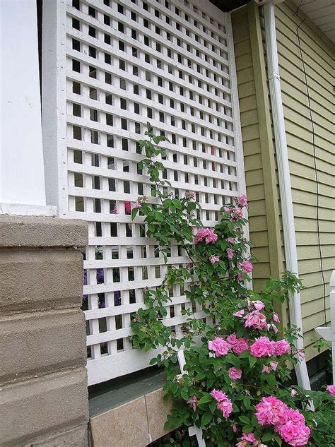 veranda lattice climbing roses on this lattice at end of porch