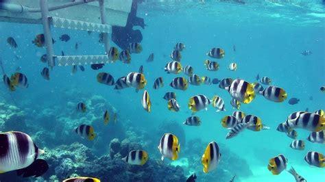 imagenes para fondo de pantalla del mar wallpapers fondo del mar