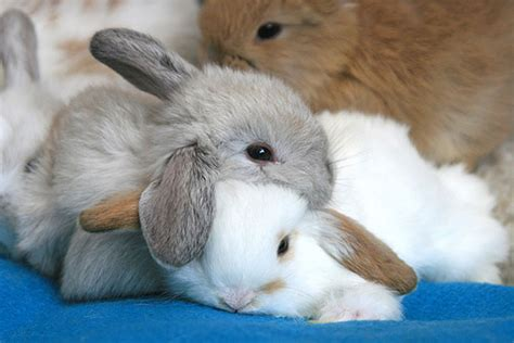 where do rabbits sleep bunny cuteness overload animals using other animals as pillows