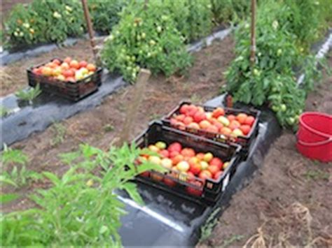 Ames Food Pantry by Donate Excess Garden Vegetables To Food Pantries Iowa