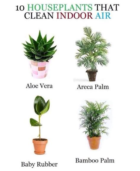 best houseplants for clean air quot 10 house plants that clean indoor air quot all sorts of diy pintere