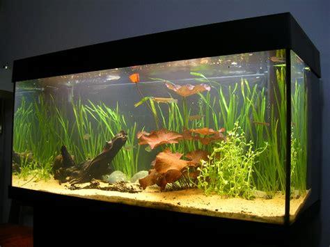 Aquarium For Home by Freshwater Aquarium Aquarium Cares