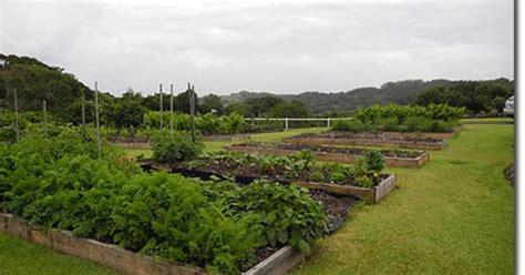 backyard permaculture australia a small acreage permaculture makeover let your garden