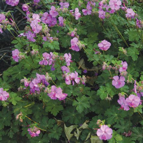 outstanding perennials for landscaping success the gateway gardener