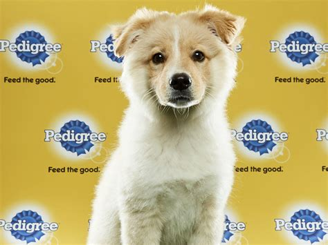 puppy bowl lineup introducing the puppy bowl xiii lineup