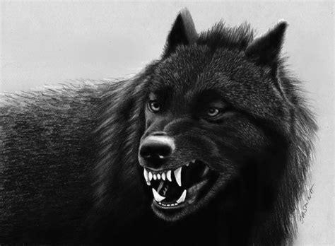Pencil Drawing: Black Wolf by JasminaSusak on DeviantArt Growling Black Wolf With Yellow Eyes