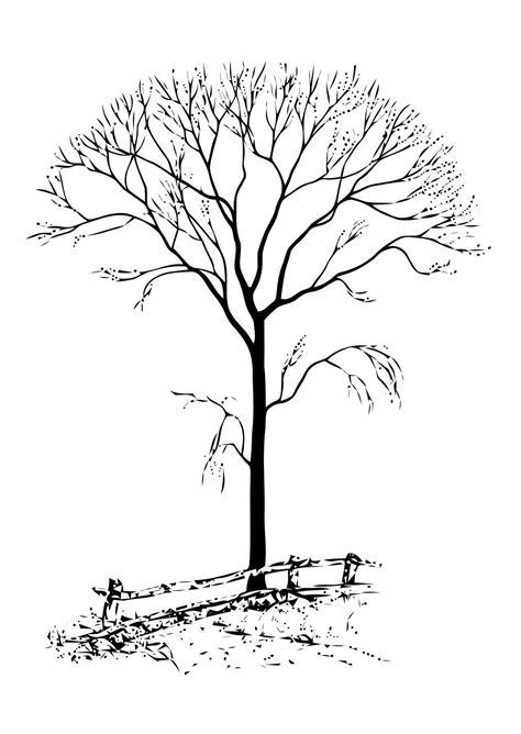 imagenes bonitas otoñales dibujo para colorear 195 rbol sin hojas img 11411