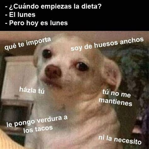 Memes De Chihuahua - 78 best images about perrito enojado on pinterest