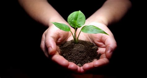 Amazing Planting A Church Without Money #2: Hands_holding_plant_-_website.jpg