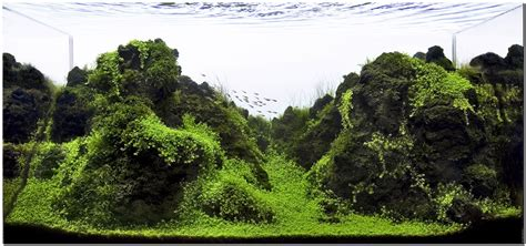 Mountain Aquascape by Adam S 3 Foot Now Mountain Cliff Section Scape Page 14