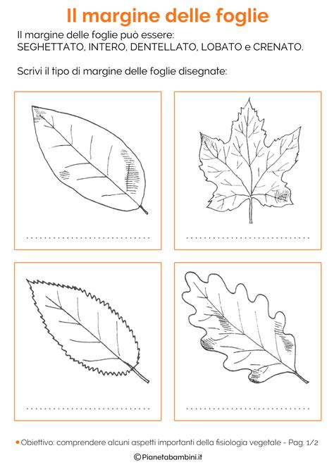 il seme tuo co testo classificazione delle foglie schede didattiche da