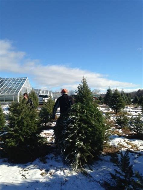 best places to cut down your own christmas tree in new
