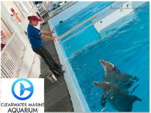See winter at the clearwater aquarium