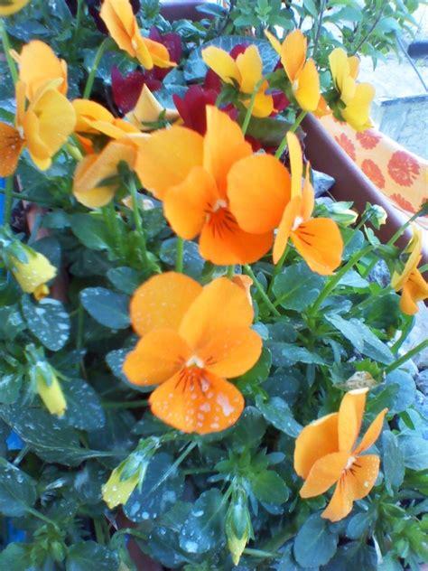 dillo con i fiori