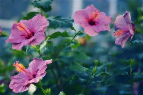 arbustos de jardin con flor los mejores arbustos en flor para tu jard 237 n